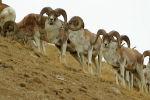 В Сарычат-Эрташском государственном заповеднике на Иссык-Куле есть тысячи редких животных. Жизнь некоторых показал старший егерь Омурбек Курманалиев.