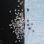 Люди кормят лебедей на берегу водохранилища атомной электростанции Хмельницкой, недалеко от города Острог (Украина). 16 февраля 2021 года