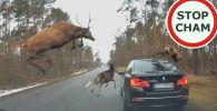 В Сети появилось видео инцидента, произошедшего на лесной дороге неподалеку от польского города Пултуск.