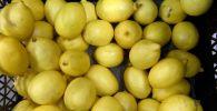 Лимоны в ящике. Архивное фото