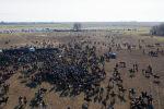 Бишкектин четиндеги Дача СУ айылында чоң аламан улак оюну болду. Ага болжол менен миңге чукул улакчы катышып, салмагы 70 килограмм болгон торпокту тартышты. Ош, Жалал-Абад, Баткен облусунан дагы атайын ышкыбоздор келишкен.