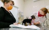 Ветеринар во время осмотра собаки в ветеринарном клинике. Архивное фото