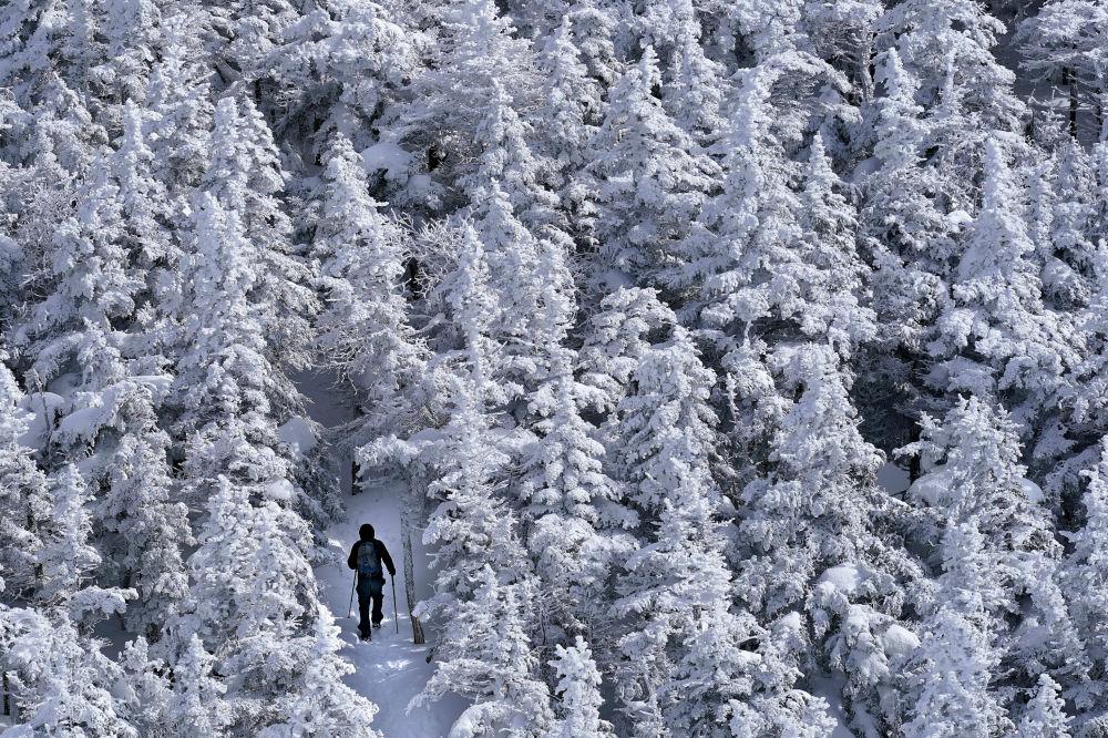 Путешественник идет среди заснеженных деревьев в Белых горах Нью-Гэмпшира, США. 4 марта 2021 года