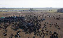 В качестве призов были разыграны два автомобиля, позолоченный пояс, верблюды, яки, жеребята, телята и даже живой волк.