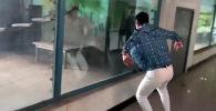 В далянском зоопарке на северо-востоке Китая посетитель решил поиграть с приматом — их сняли на видео.