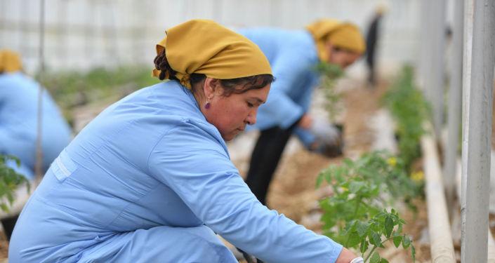 Рабочие фермерского хозяйства в Араванском районе Ошской области