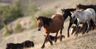 Лошади. Архивное фото