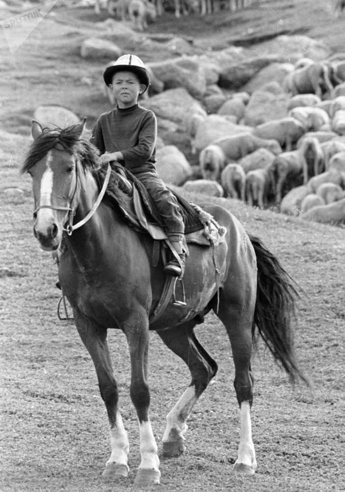 Кой кайтарган малчынын уулу, 1978-жыл