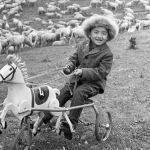 Оюнчук аты менен кой кайтарган кичинекей бала, 1970-жыл