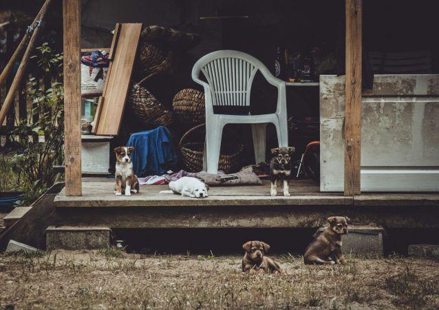 Щенки во дворе дома. Архивное фото