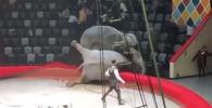 В Казани во время выступления слоны устроили драку, и представление отменили. Дрессировщик прокомментировал ситуацию.