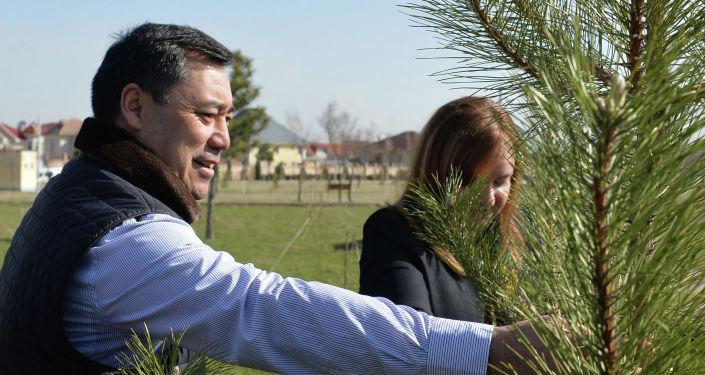 Президент Садыр Жапаров вместе с представителями дипломатического корпуса высадил деревья в парке Ынтымак в поддержку активизации участия женщин на выборах в местные кенеши