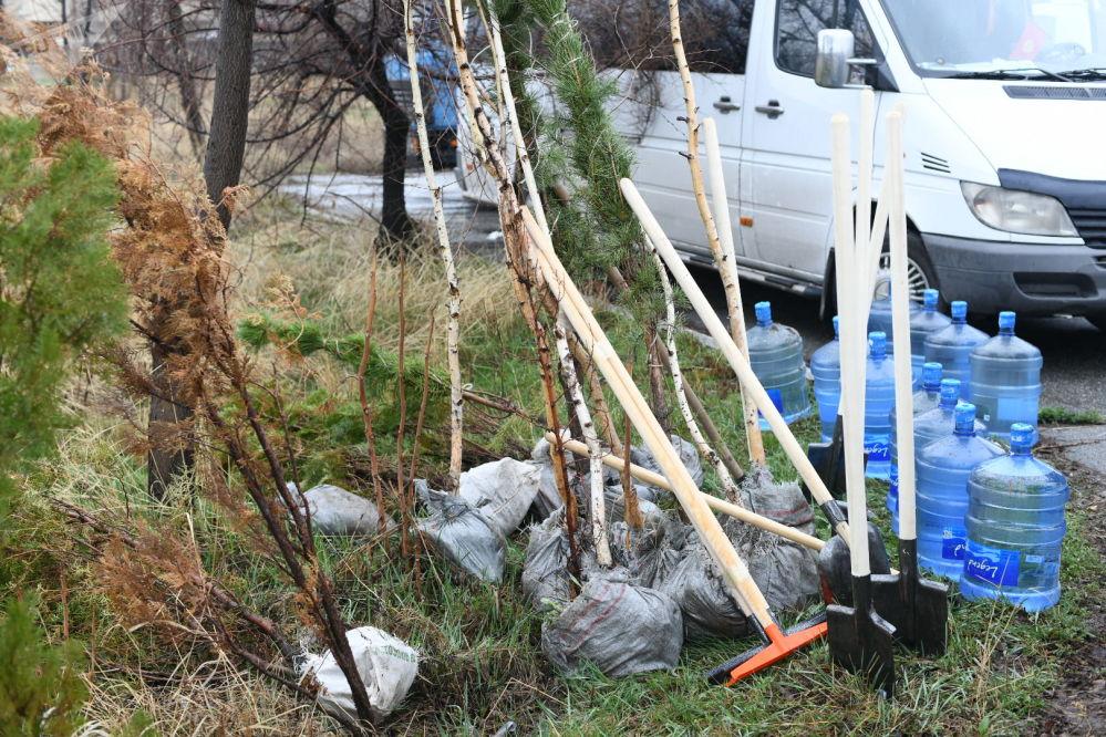 Акциянын алкагында Бишкекте 80 түп дарак көчөтү отургузулду