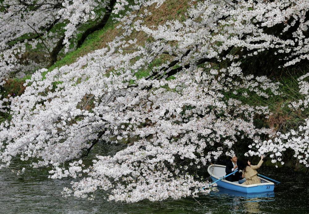 Пара катается на лодке рядом с цветущей сакурой в парке Чидоригафути в Токио, Япония, 27 марта 2021 года