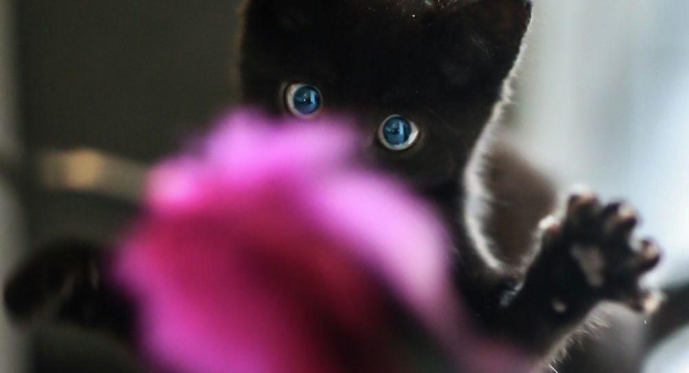 Котенок во время игр. Архивное фото