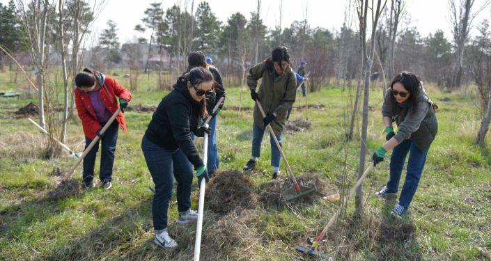 Высадка деревьев премьер-министра Улукбека Марипова с представителями бизнеса и IT— компаний