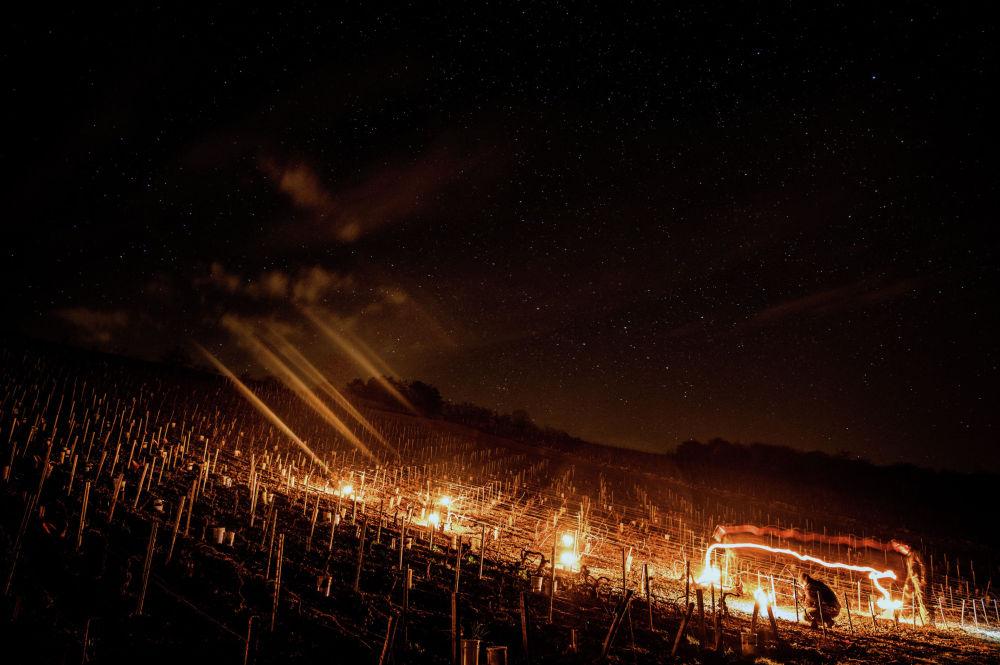 Виноградарь из винодельческого хозяйства Daniel-Etienne Defaix зажигает огни на своем винограднике недалеко от Шабли. Бургундия, 7 апреля 2021 года, когда ночью температура опускается ниже нуля градусов по Цельсию.