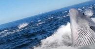 Интересный случай произошел с туристами в ходе поездки по наблюдению за китами в заливе Алгоа в Южной Африке.