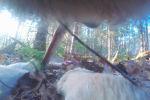 Ученые из Миннесоты (США) запустили полевое исследование Voyageurs Wolf Project. В рамках проекта на волков надевают ошейники с камерами, чтобы проследить за их поведением летом.