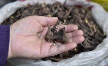 Продажа Иссык-Кульского корня на рынке в Бишкеке