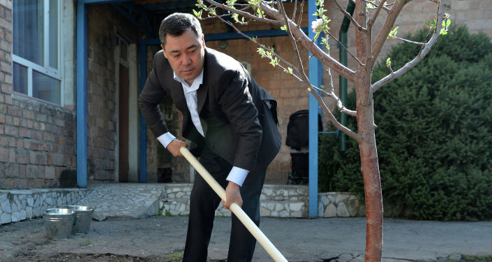 Президент Кыргызстана Садыр Жапаров во время посадки деревьев в рамках международной акции Сад памяти в Бишкеке