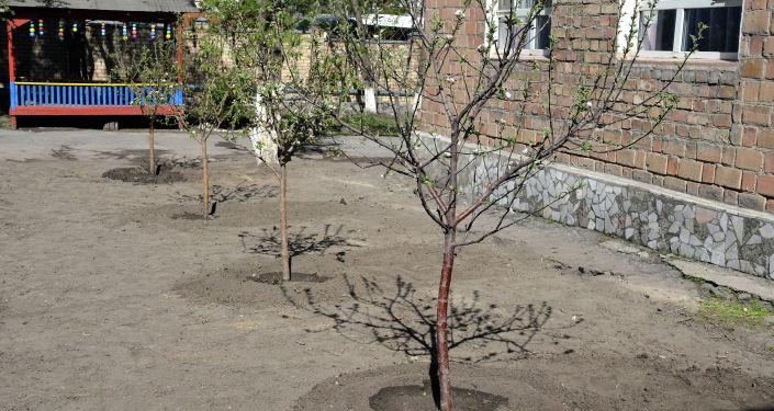 Высадка деревьев на территории Специализированного центра реабилитации детей и семьи в Бишкеке в рамках международной акции Сад памяти