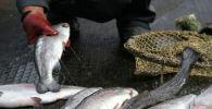 Мертвые рыбы. Архивное фото