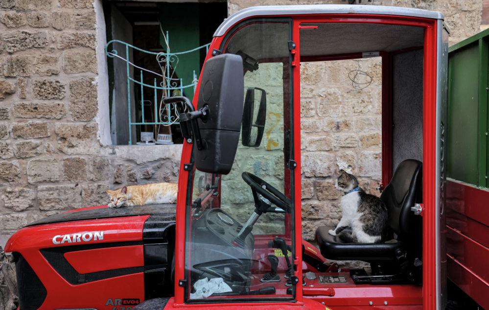 Кот сидит на месте водителя трактора в Израиле.
