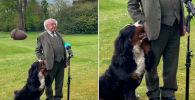 Пес президента Ирландии Майкла Хиггинса растрогал интернет-пользователей, пытаясь привлечь внимание хозяина.