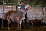 Куйруктуу койлор десе эле гиссарлар көзгө элестейт. Кыргызстан гиссардан да чоң жана андан өзгөчөлөнгөн Арашан деген койлорду каттоого алды.