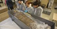 Древняя мумия, которая была обнаружена в королевских гробницах в Верхнем Египте