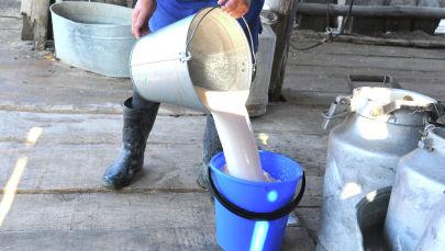 Женщина сливает надоенное молоко. Архивное фото