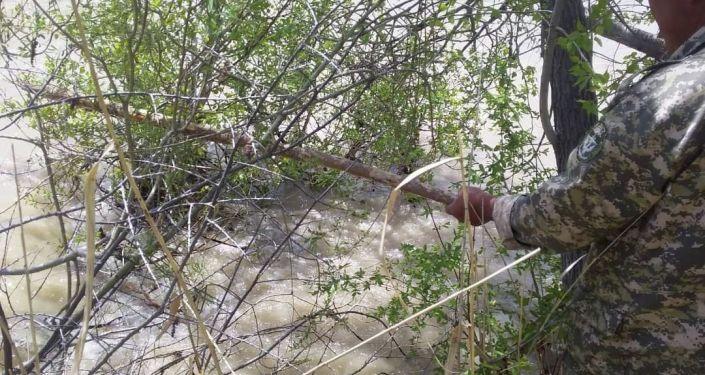 Сотрудник МЧС КР во время поисков утонувшего в Джалал-Абадской области