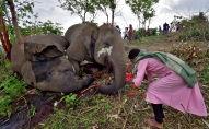 Женщина молится рядом с трупами слонов в предгорьях заповедного лесного массива Кундоли в Индии