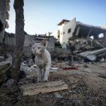 Кошка возле разрушенного израильским авиаударом дома в Газе.