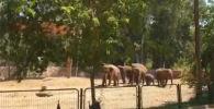 Слоны в зоопарке Тель-Авива (Израиль) научились распознавать сирены, предупреждающие о ракетной атаке, и защищают своих детенышей.