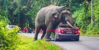 Таиланддын Кхао Яй улуттук паркында жапайы пил жолдогу унааны токтотуп калды