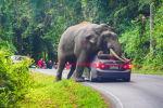 Дикий слон останавливает машину на дороге в национальном парке Кхао Яй в провинции Накхонратчасима в Таиланде