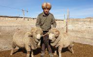 Животновод из Тонского района Иссык-Кульской области Баатырбек Акматов. Архивное фото