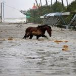 Лошадь идет по затопленной улице в индийском штате Западная Бенгалия. 26 мая 2021 года