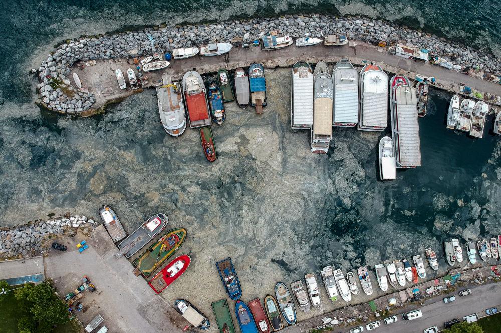 Түркиядагы мрамор деңизинин жээгин экология үчүн кооптуу былжырлар каптап кетти