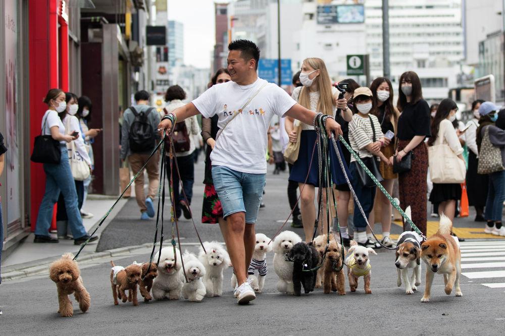 Иттерди сейилдетүү боюнча сесипкөй адис Нобуаки Морибе Токио шаарында кардарлардын үй жаныбарлары менен