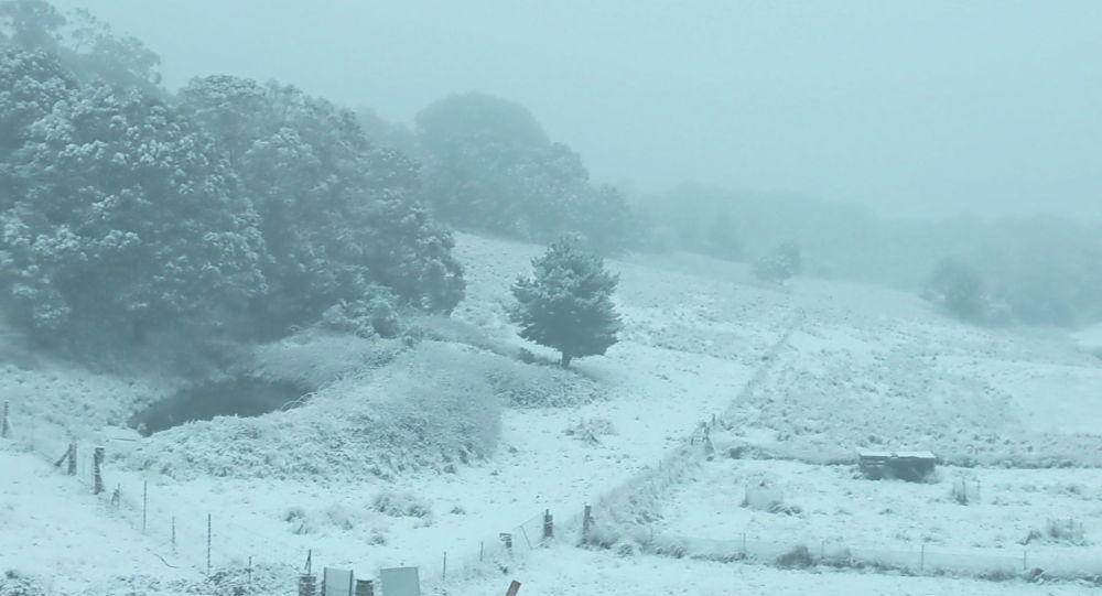 Снег падает на ферме в Санни Корнер, Новый Южный Уэльс, Австралия, 10 июня 2021 года