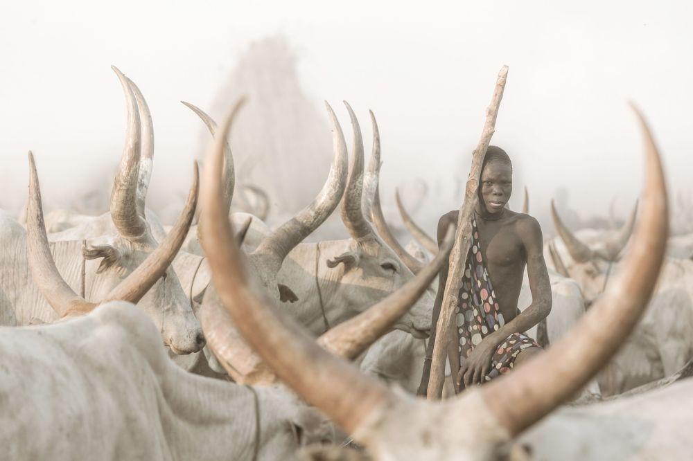 Мундари уруусунан мал айдап бараткан аял. Сүрөт швейцариялык фотограф Йозеф Бюрги тарабынан Түндүк Суданда тартылган. Бул эмгек Кадимки портрет категориясында мыкты деп табылды