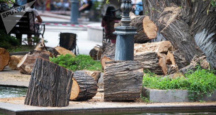 У фонтанного комплекса Центрального универсального магазина Айчурек ведется обрезка сухой части ив