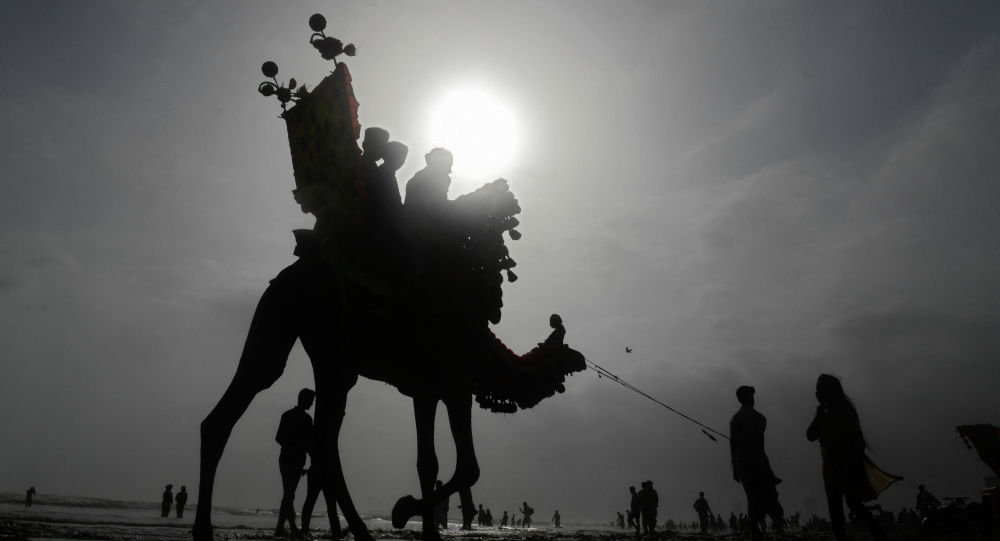 Жайдын аптаптуу күнүндө төөдө кишилер Карачи шаарында (Пакистан)