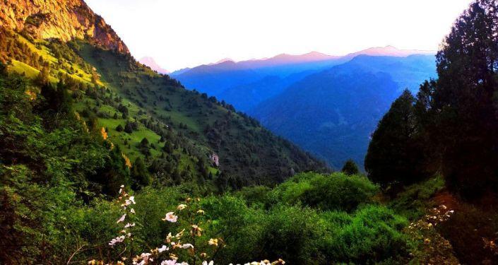 Пастбище Сары-Ой в Алайском районе, которое стало местом внутреннего туризма в Ошской области