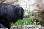 Медведь-губач. Архивное фото