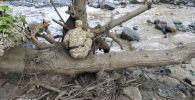Аксы районунун Жолборсту айылында сел агызган жерде ӨКМ кызматкерлеринин издөө иштери