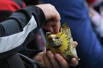 Мужчина ест семейчки на футбольном матче. Архивное фото